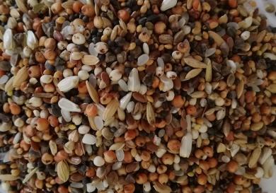mieszanka-drobne-nasionka-390x273